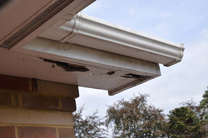 Rotten Wood on Roof Soffits, Gutters above and Brick Wall Below